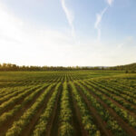 Pesticides, glyphosate, and why buying organic matters